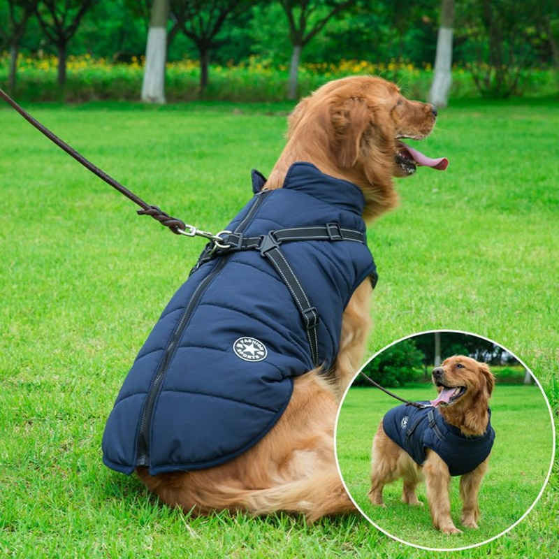 jacket for dogs with harness