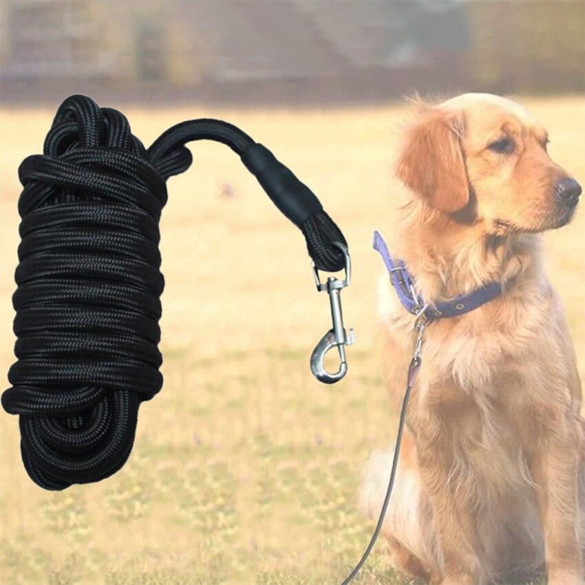 large dog leash
