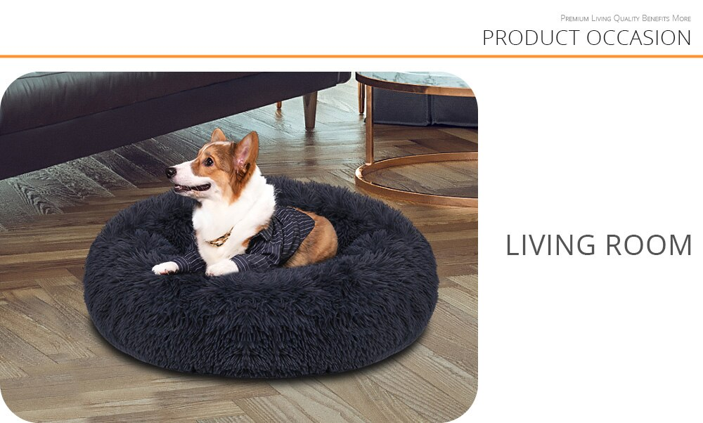 dog bed in living room