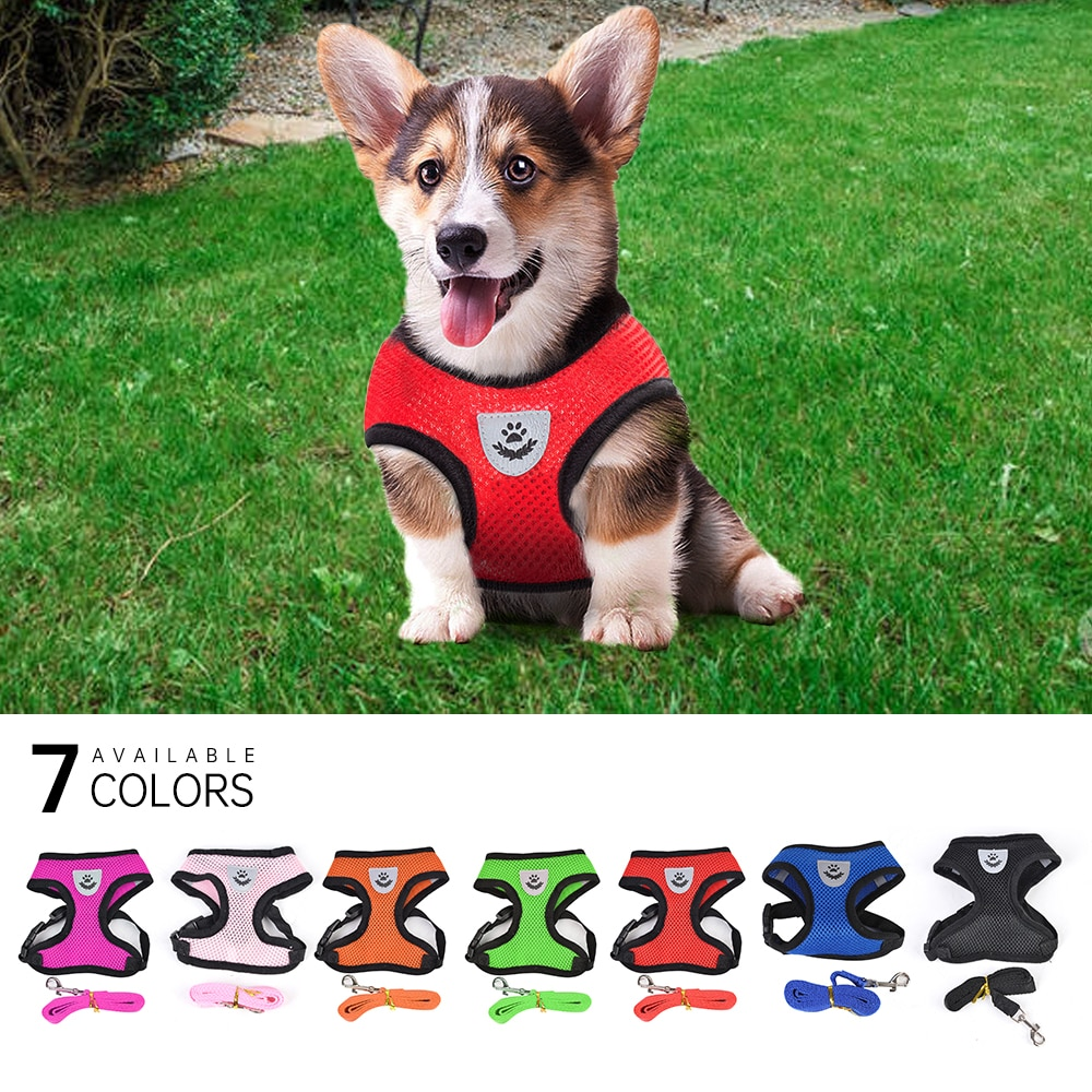 Dog Harness With Leash Colours